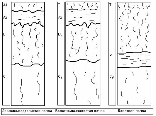 Строение профиля основных почв