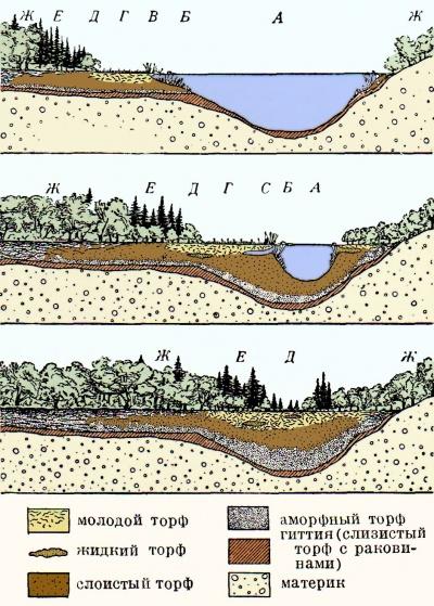 Схема заболачивания озера: