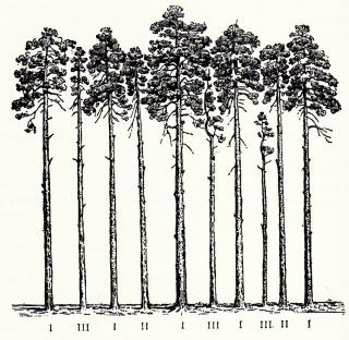 Как растения борются за свое существование реферат 7921